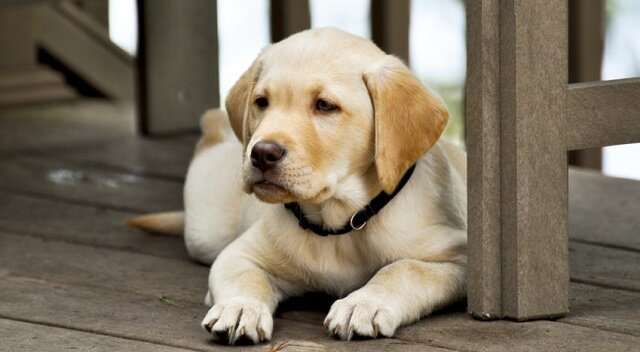 Rolnik chciał przekonać chłopca by nie kupował niepełnosprawnego psa, to co usłyszał jest wzruszające