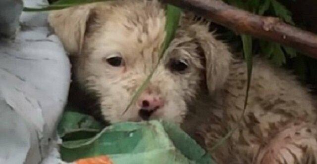Mały szczeniak przebywał na brudnym wysypisku w deszczu i trząsł się z zimna