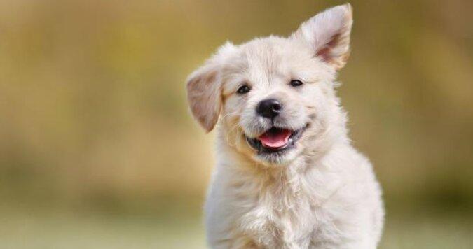 Gdzie byłeś: reakcja psa na powrót właściciela jest po prostu nieporównywalna. Wideo