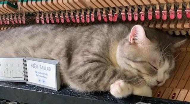 Wideo: Kot cieszy się muzycznym masażem