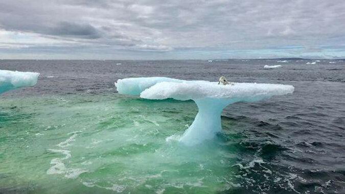 Rybacy znaleźli stworzenie na górze lodowej w morzu i musieli działać szybko