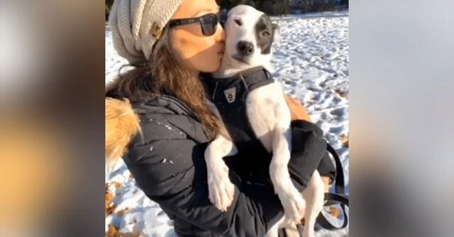 Kobieta próbuje pokonać strach przed psami, adoptując psa bojącego się ludzi. Zobacz co z tego wyszło