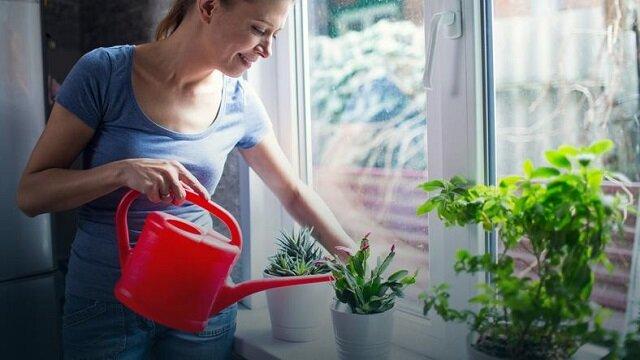 Super sprawa. Do litra wody wlej pół szklanki mleka, podlej rośliny i obserwuj, co się będzie działo