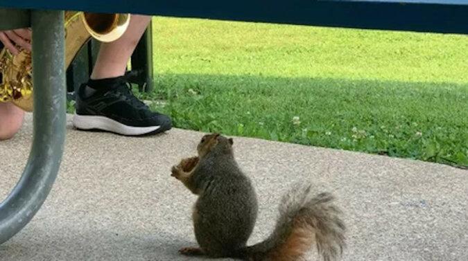 Koneser muzyki: saksofonista dał prawdziwy koncert dla jednej wiewiórki. Wideo