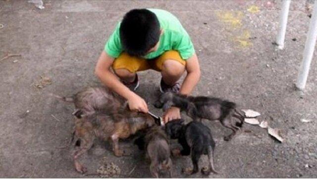 Ten chłopiec znalazł za kościołem coś, co przypominało sześć wielkich szczurów. Rok później wyglądają zupełnie inaczej