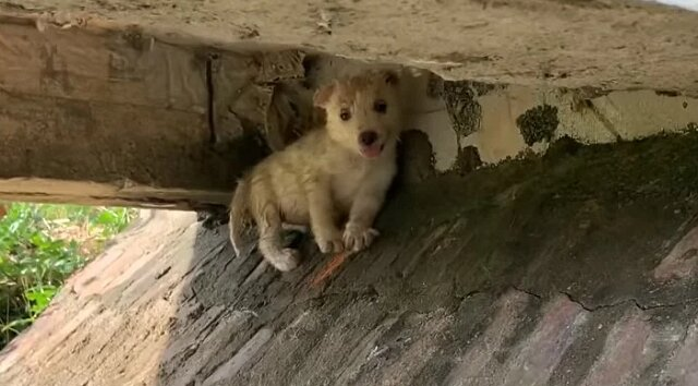 Śliczny biały szczeniak zdał sobie sprawę, że ludzie go nie potrzebują i zamieszkał pod mostem. Zabrałem go do siebie