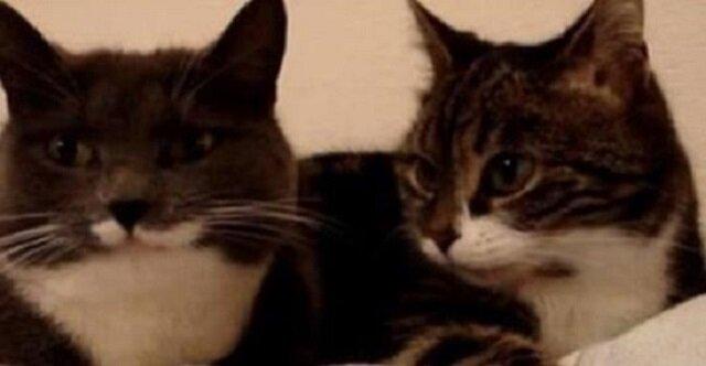 Dwóch kotów leżących na łóżku przyłapano na rozmowie ze sobą. Niezwykle również konczy się ich świetna dyskusja