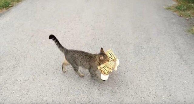 """Pręgowany kot """"pożycza"""" pluszową zabawkę u sąsiadów"""