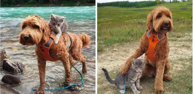 Urocza opowieść o kociaku, który znalazł swojego psa i poszedł za nim. Przyjaźń od pierwszego wejrzenia