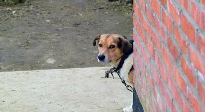 Pies na łańcuchu zorientował się, że chcą mu pomóc – jego reakcja była niesamowita