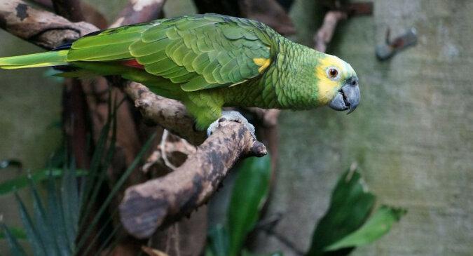 Papuga zamknięta w klatce bezczelnie żartuje z mieszkańców domu. Wideo