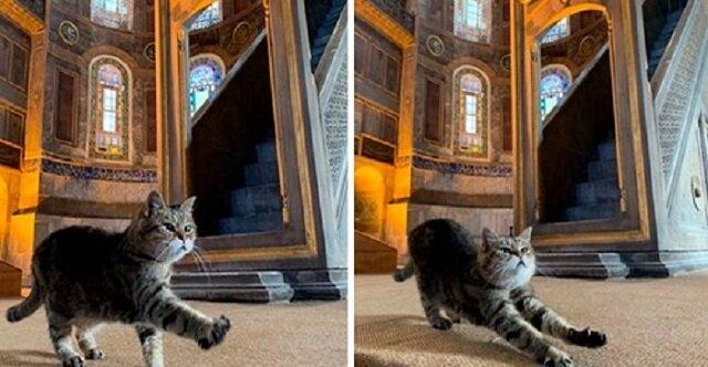 Kot Gli – to prawdziwy gospodarz świątyni Hagia Sophia w Stambule