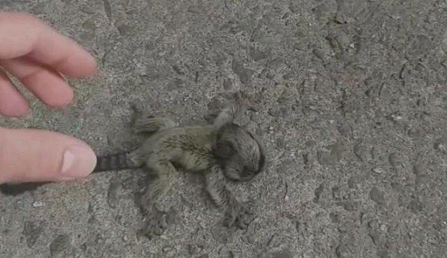 Brazylijczyk uratował malutką pigmejkę i przekazał ją matce