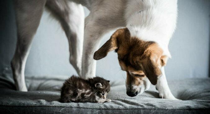 Rodzina podrzuciła nowonarodzonego kociaka do karmiącego psa. Oto reakcja suni
