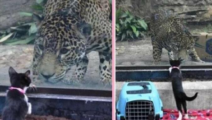 Do zoo przywieziono bezdomne zwierzęta, aby zapoznać je z lokalnymi zwierzętami