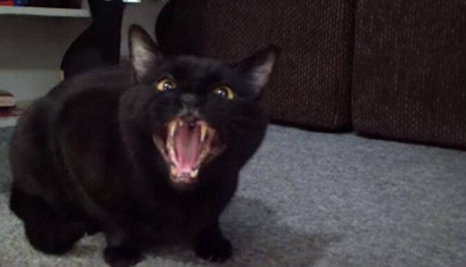 Śpiewający kot. Wideo