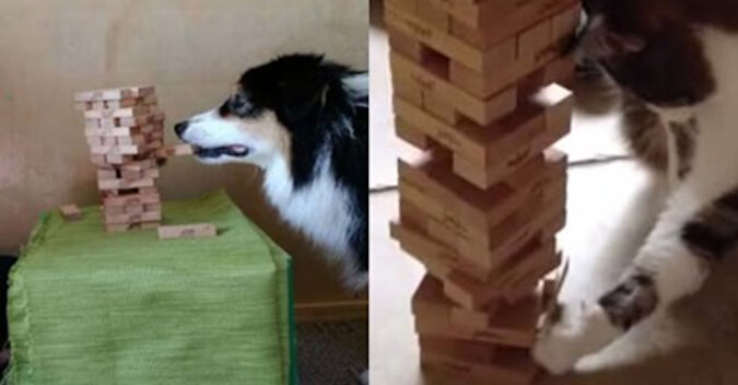 Koty kontra psy: gra w Jengę