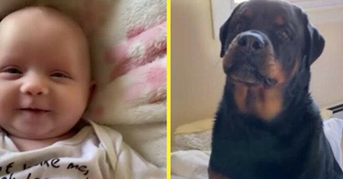 """Dziewczyna z psem uczyła córkę słowa """"mama"""". Pies był tak zmęczony czekaniem, że sam się odezwał"""