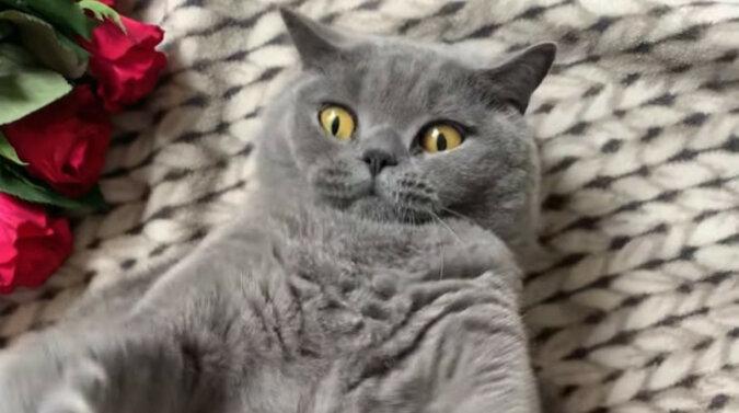 Zaraz złapię: zabawna gra kota z właścicielem wzruszyła Internet. Wideo