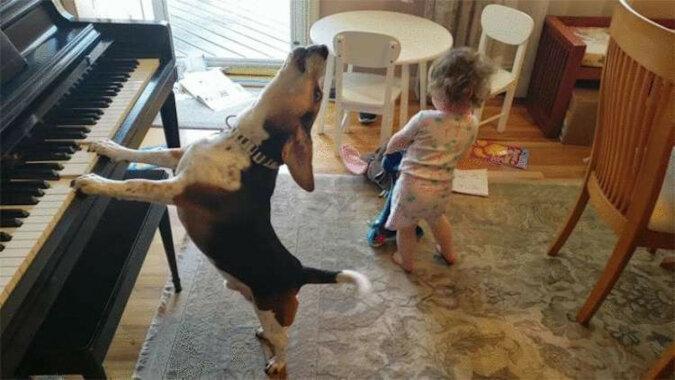 Mężczyzna sfilmował swoją córkę tańczącą do muzyki granej przez psa na pianinie