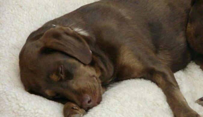 Głuchoniewidomy pies przez kilka lat bał się chodzić, ale nowy przyjaciel wywrócił jej życie do góry nogami
