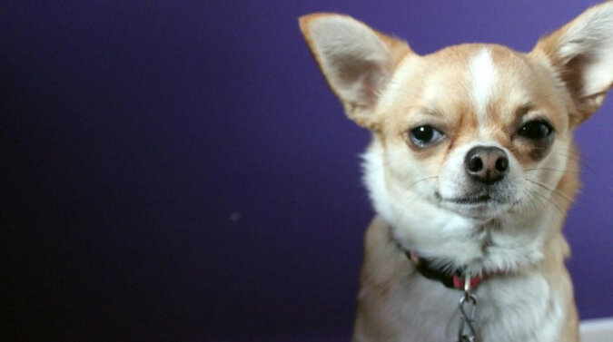 """""""Kulka gniewu"""": niezwykła reakcja psa na jedzenie rozbawiło użytkowników. Wideo"""