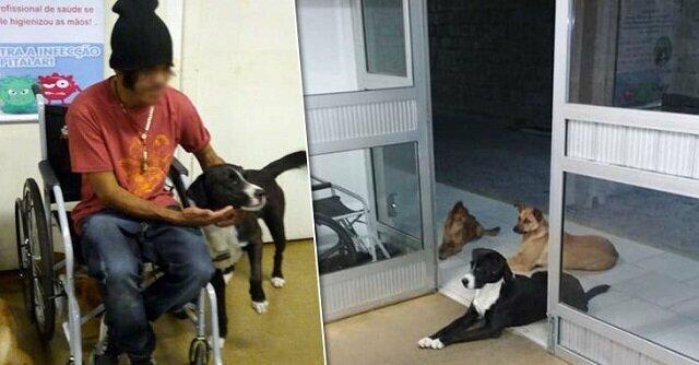 Kiedy karetka zabrała bezdomnego, wszystkie jego cztery psy pobiegły za samochodem