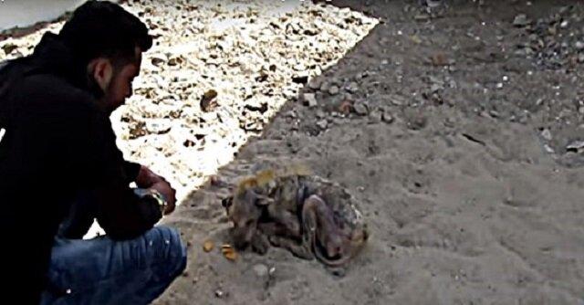 Pies, który nie mógł się poruszać, zaczął płakać na widok ratowników. Wideo