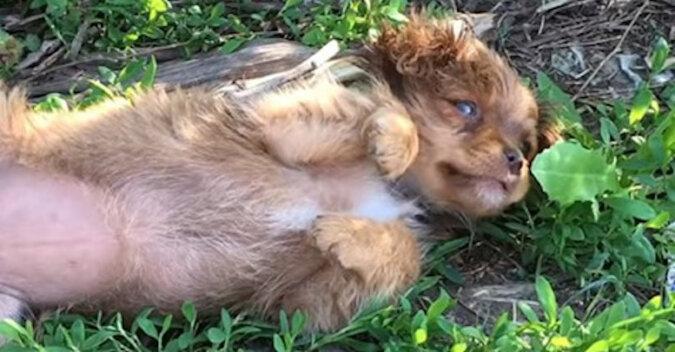 Wolontariusze przyjechali, aby uratować szczeniaka, ale w krzakach czekała na nich cała puszysta rodzina