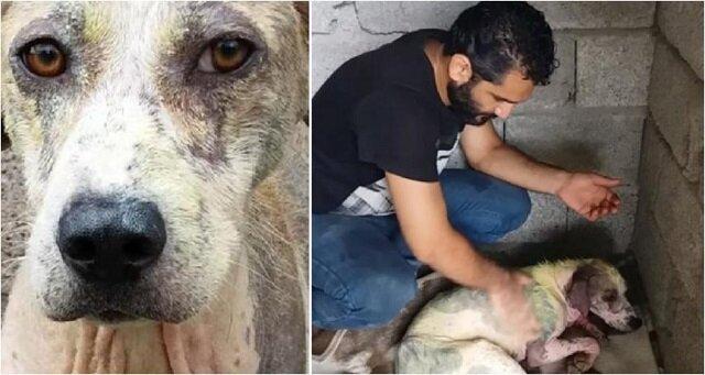 Mężczyzna zabrał chorego i wychudzonego psa z ulicy i całkowicie zmienił jego życie. Zobacz jaki jest teraz piękny