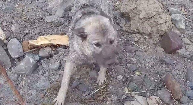 W Norwegii, w miejscu niedawnego osuwiska, ratownicy znaleźli ocalonego psa. Zobacz, co stało się potem