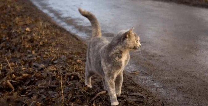 Kotka na imię Pusza porzuciła swoje małe kocięta i uciekła do lasu