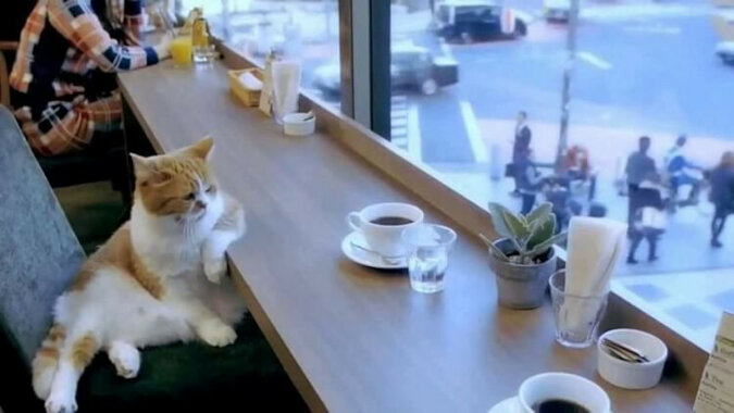 Kotka wchodzi do kawiarni, zamawia kawę i ciasto. Kelner stoi z otwartymi ustami
