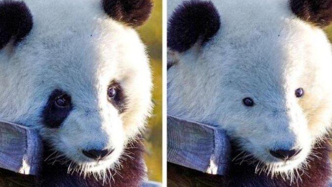 Niesamowity widok: zwierzęta bez charakterystycznego umaszczenia