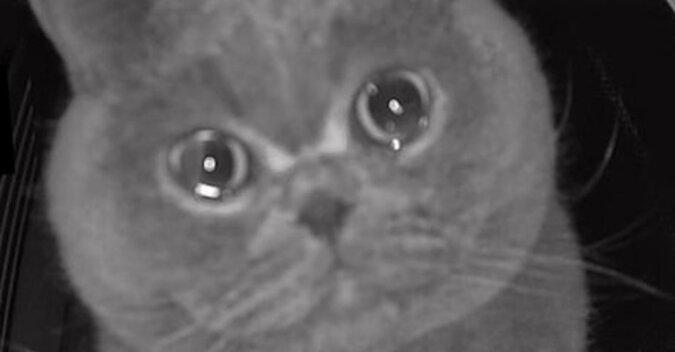 Właścicielka zostawiła kota samego w domu - rozpłakał się, gdy usłyszał jej głos