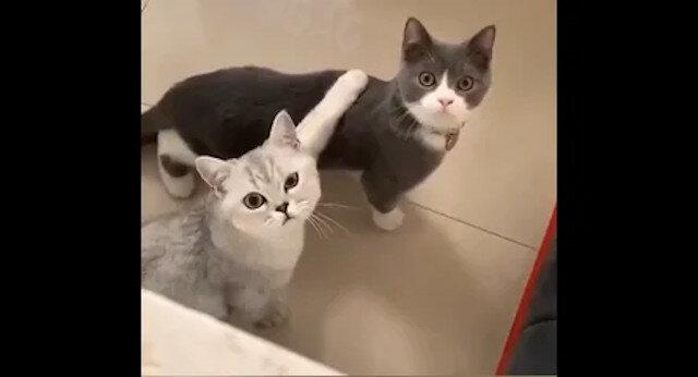 """""""Co kręcisz?"""": Kot zdenerwował się, że właścicielka szpieguje jego pójście do kuwety. Zabawne wideo"""