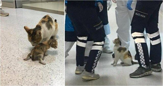 Kotka przyniosła kociątko do szpitala pogotowia. Lekarze zbadali maleństwo