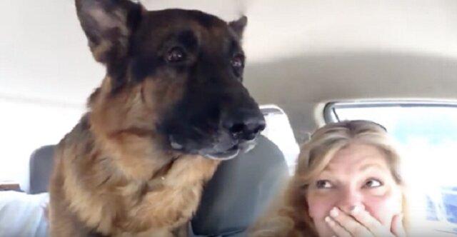 Pies zdał sobie sprawę, że jedzie do weterynarza. Jego reakcja rozbawiła właścicieli do łez