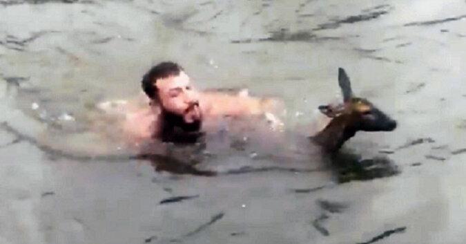 Mężczyzna rozbiera się i nurkuje w zimnej wodzie, by uratować tonącego jelenia