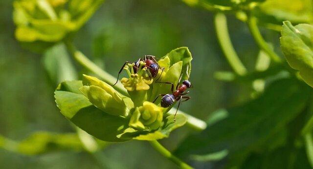 Najbardziej skuteczny sposób na pozbycie się mrówek z ogrodu