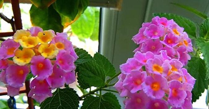 Łyżka oleju rycynowego do domowych kwiatów i można wystawiać je na sprzedaż. Najlepszy przepis na dokarmianie kwiatów