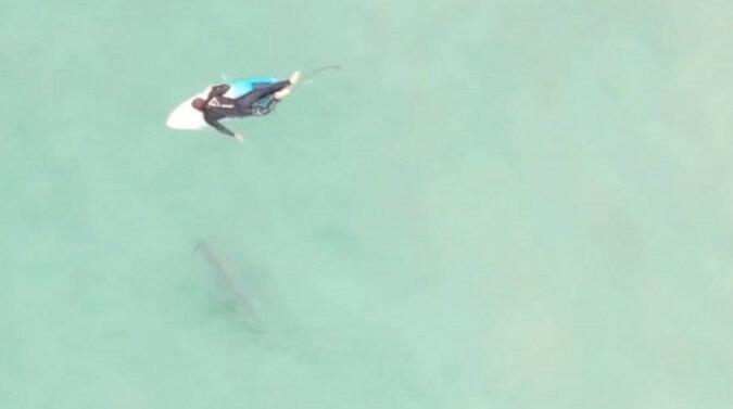 Surfer nie zauważył rekina i wskoczył do wody obok niego. Wideo
