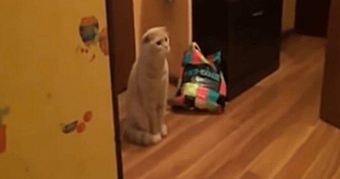 Kot zobaczył, jak kąpało dziecko i jego reakcja jest niesamowita. Wideo