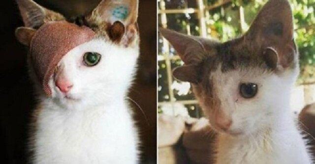 Historia kota o dziwnym wyglądzie: dodatkowe uszy, tylko jedno oko. Ale ten biedak trafił do godnych zaufania ludzi