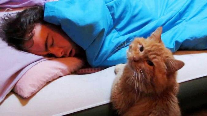 Każdego dnia kot budzi swojego właściciela w bardzo nietypowy sposób