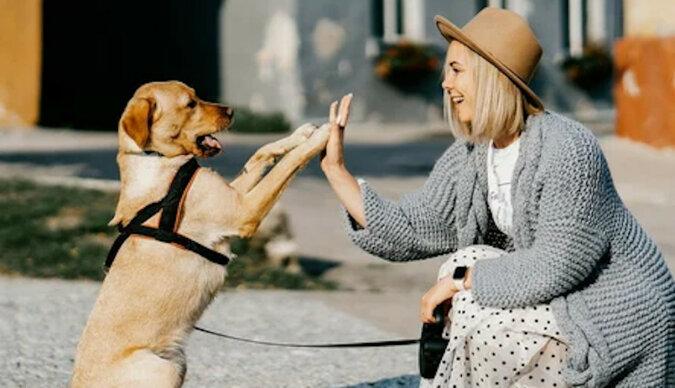 Logopeda nauczyła psa mówić: zwierzak zna już 40 słów, a nawet prowadzi małe dialogi z właścicielką