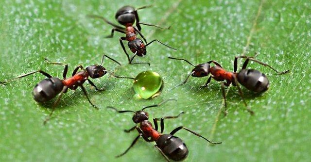 Jak łatwo pozbyłem się mrówek ze szklarni. Tradycyjne sposoby na szkodniki