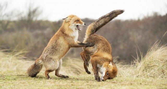Najlepsze śmieszne zdjęcia zwierząt, finalistów konkursu fotograficznego 2019