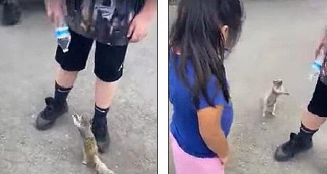 Gdy wiewiórka w rękach ludzi zauważyła plastikową butelkę z wodą, zaczęła prosić, aby się nią podzielić. Bardzo wzruszające wideo