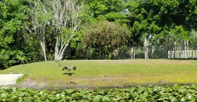 Filmik motywacyjny: odważna mama odpędza aligatory, które chcą zjeść jej pisklęta
